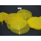 50 Skeleton Bayan Leaves Yellow (1988)