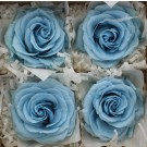 4 Preserved Rose Heads Premium Baby Blue (4529)