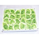 24 Foam Roses Orange Light Green (3529)