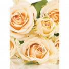 25 Oasis Florist Folded Cards  Cream Roses (4154)